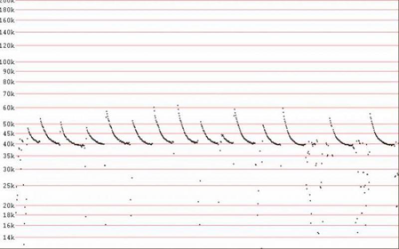 עטלפון לבן שוליים Pipistrellus kuhlii