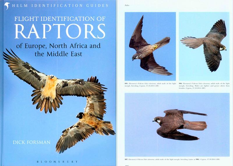 by Dick Forsman  ,Flight Identification of Raptors of Europe, North Africa and the Middle East